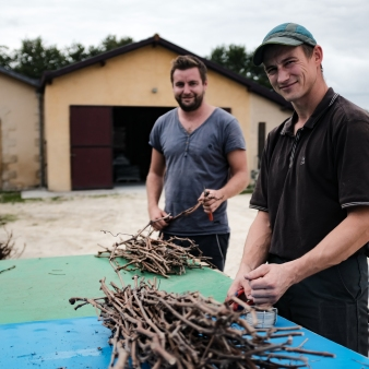 Vine Cuttings Are Used to Filter the Wine